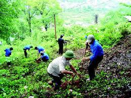 Trình tự thủ tục phê duyệt phương án trồng rừng thay thế