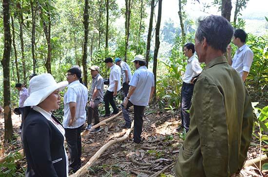 Cho thuê rừng cho tổ chức
