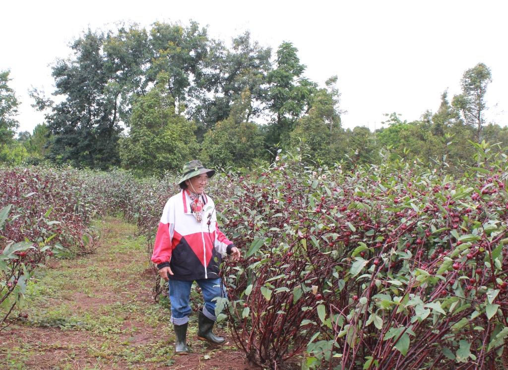 Mức hỗ trợ ổn định đời sống và sản xuất tại Thái Bình khi Nhà nước thu hồi đất
