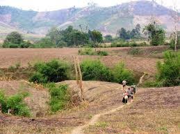 Xác định đất tự khai hoang có phải là đất 5% không