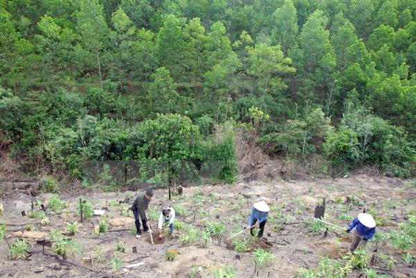 Lập phương án trồng rừng thay thế khi chuyển mục đích sử dụng rừng