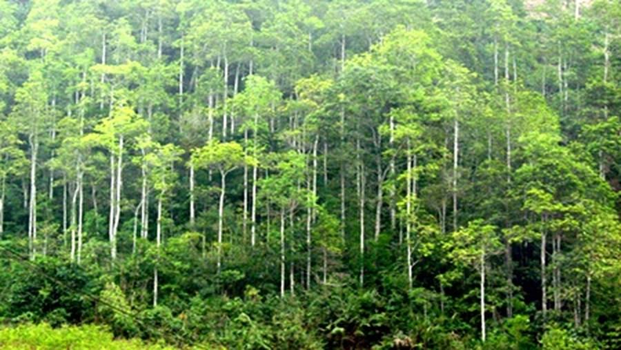 Tải Luật bảo vệ và phát triển rừng 2004 mới nhất theo pháp luật hiện hành