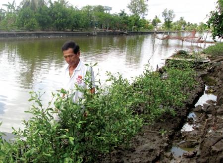 Bồi thường di chuyển mồ mả và bồi thường cây trồng vật nuôi tại Hậu Giang khi Nhà nước thu hồi đất