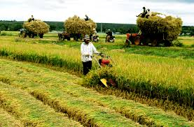 Bồi thường đối với đất nông nghiệp tại An Giang khi Nhà nước thu hồi đất