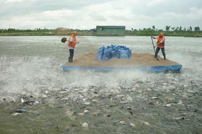 Bồi thường đối với vật nuôi tại Quảng Trị khi Nhà nước thu hồi đất