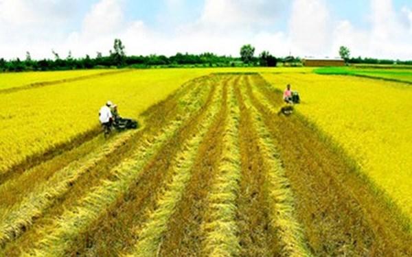 Nhận chuyển nhượng quyền sử dụng đất trồng lúa