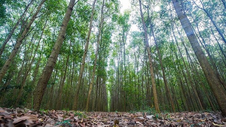 Thủ tục chuyển đất rừng sản xuất sang đất ở 2019