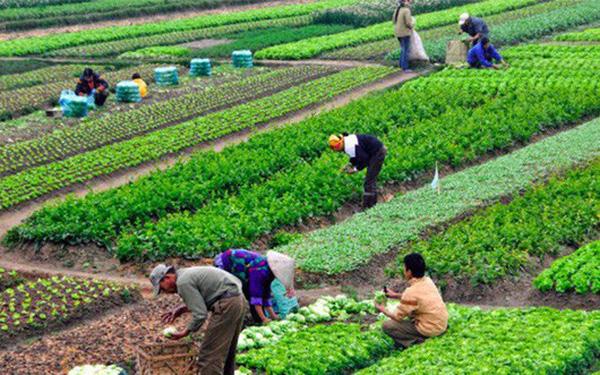 Hỗ trợ ổn định đời sống và sản xuất tại Quảng Trị khi Nhà nước thu hồi đất