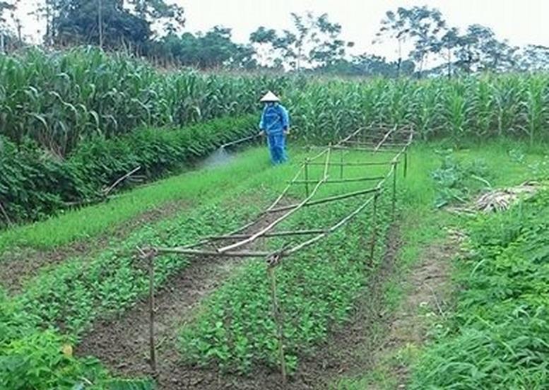 Bảo vệ quyền khi đất nông nghiệp bị chiếm dụng theo quy định của luật đất đai