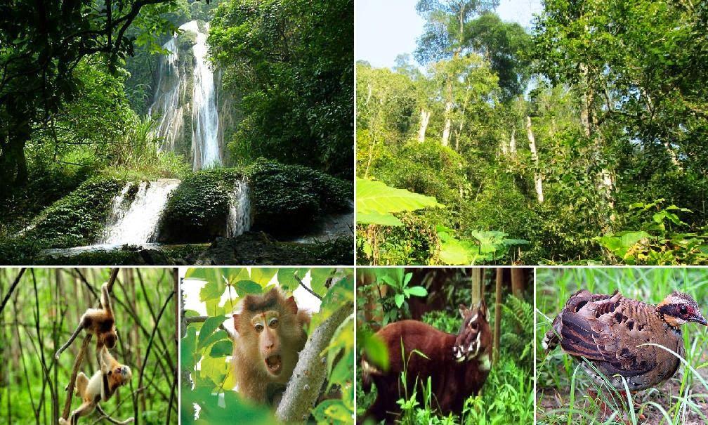 Mức phạt vi phạm quy định về bảo tồn hệ sinh thái tự nhiên