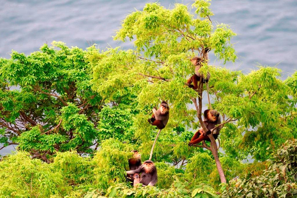 Mức phạt vi phạm quy định về bảo vệ các loài hoang dã