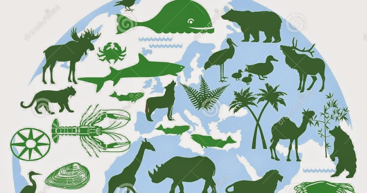 Mức phạt vi phạm về quản lý cơ sở bảo tồn đa dạng sinh học