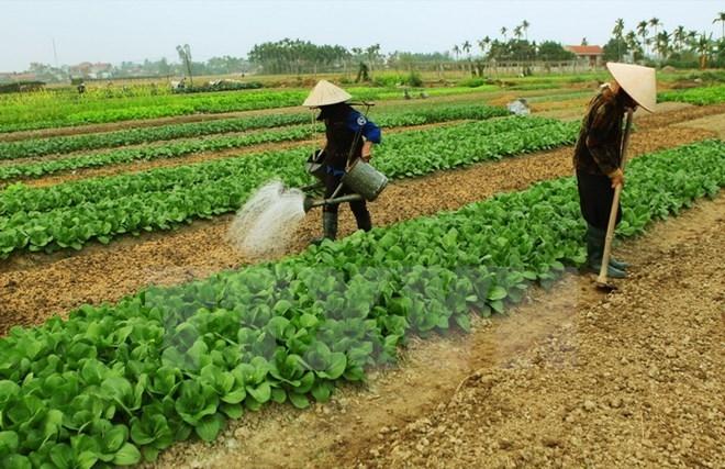 Đất nông nghiệp có được xây nhà không? – Luật Toàn Quốc