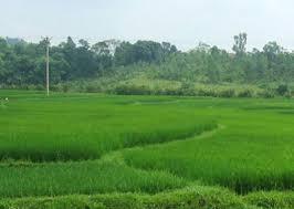 đất trồng lúa để thực hiện dự án tại Thái Bình