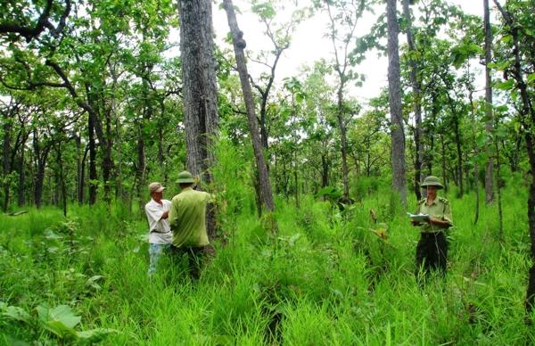 Quyền hạn chủ rừng đối với đất rừng sản xuất