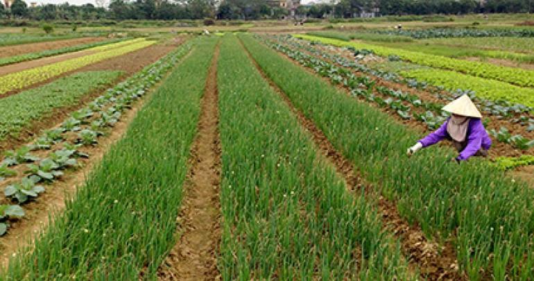 Diện tích tách thửa đất nông nghiệp tại Ninh Thuận