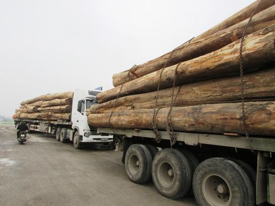 Hành vi vận chuyển gỗ trái phép bị xử phạt như thế nào?