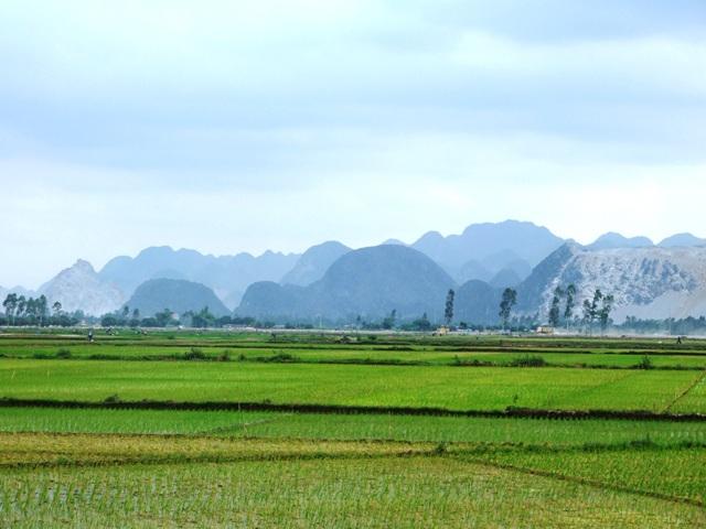 Diện tích tách thửa đất nông nghiệp tại Tây Ninh theo quy định