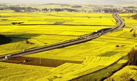 Thủ tục chuyển nhượng đất trồng lúa do dồn điền