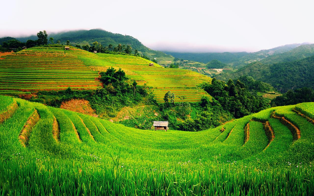 Chuyển đổi từ đất trồng lúa sang đất trang trại