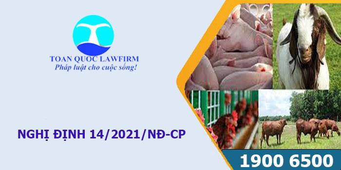 Nghị định 14/2021/NĐ-CP quy định về xử phạt vi phạm hành chính về lĩnh vực chăn nuôi.